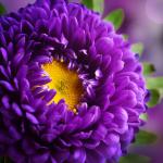 Farfallascura13's avatar