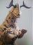 M's other alt account's avatar