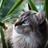 Wolfsrock1045's avatar