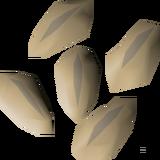 Barley seed detail.png