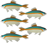 Minnow detail.png