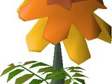 Marigolds (Construction)