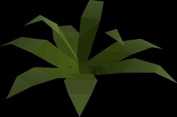 Fern (small plant)