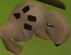 Spotted kebbit