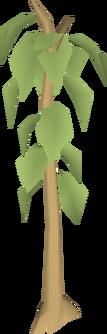 Teak tree.png