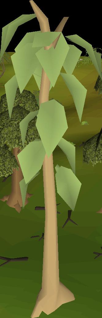 Money making guide/Cutting teak logs