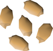 Palm tree seed detail.png