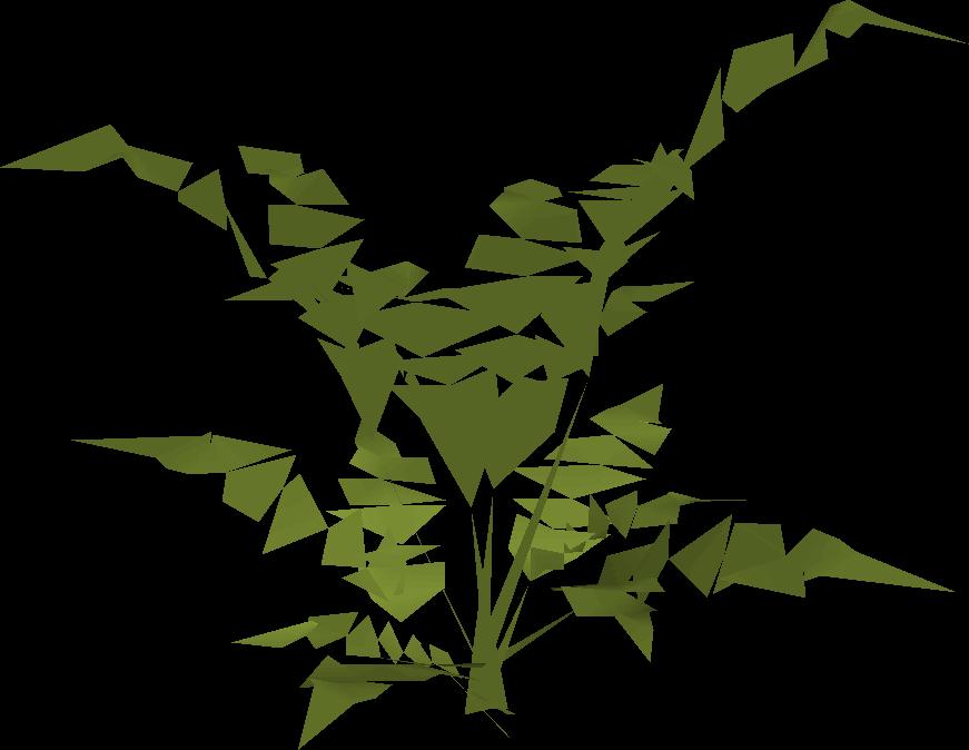 Fern (big plant)