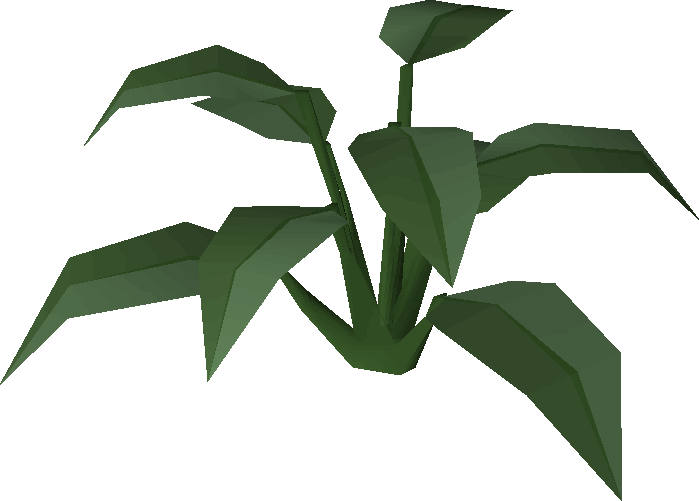 Large leaf bush