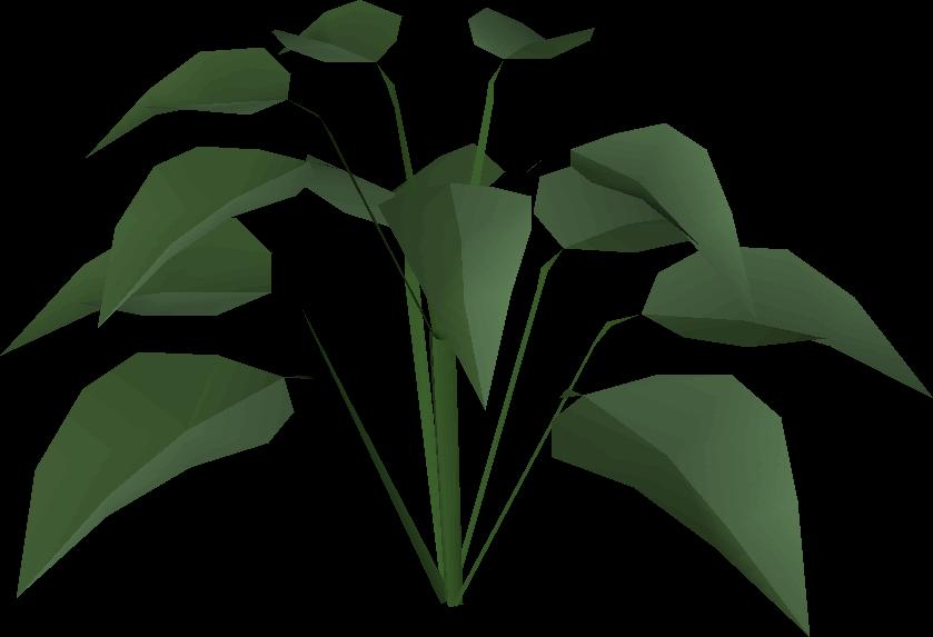 Huge plant