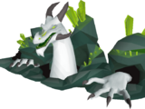Great Olm