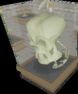 Mandibular Maximus display