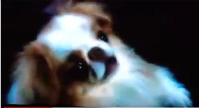 Caesar (Tamara's Dog)