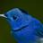 TehNyan's avatar