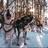 Alaskan Sled Dog Musher's avatar