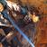 DevilSlayer123's avatar