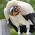Vultureking
