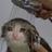 Fakefishyfood's avatar