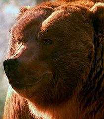 Sonny-the-bear-dr-dolittle-2-82.4.jpg