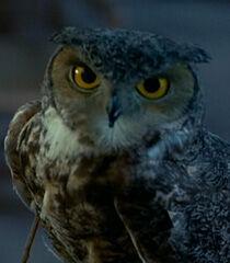 Owl-dr-dolittle-49.4.jpg