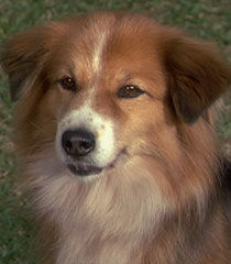 Prologue-dog-dr-dolittle-61.jpg