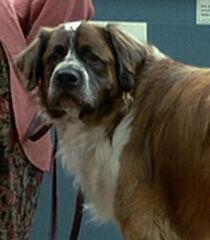 Heavy-womans-dog-dr-dolittle-7.5.jpg