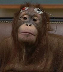 Orangutan-dr-dolittle-2.29.jpg