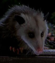 Possum-dr-dolittle-2-60.9.jpg