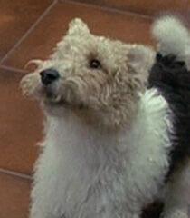 Compulsive-dog-dr-dolittle-29.4.jpg