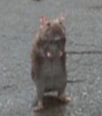 Mom-rat-garfield-the-movie-43.6.jpg