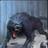 SirWolfBane1's avatar
