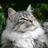9Песчаная Буря9's avatar