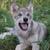 Wolfiegirl28