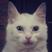 Kerzhak's avatar