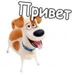 Пёс Шарик's avatar