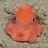 Taisa9's avatar