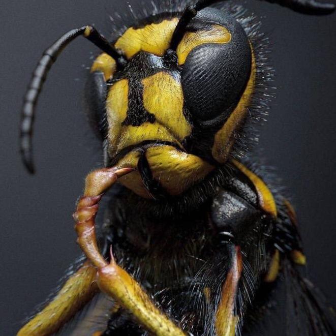 Ensoreus's avatar