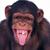 Monkey8814
