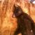 Bonia The Cat