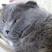 YarigHood's avatar