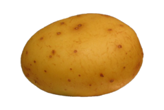 PotatoFoogle.png