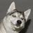 LunarDogLuno's avatar