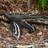 Ti58's avatar
