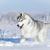 Snowhound923