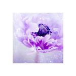 Fayriesakura's avatar