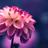 Ladyvan's avatar