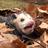 Nebezrail's avatar