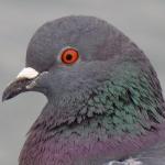 TheSeventhGod's avatar
