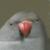 Ryushusupercat