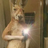CosmicKai227's avatar